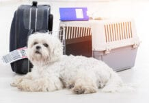 Moving abroad with pets
